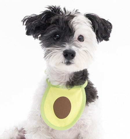 Avocado Dog Bib