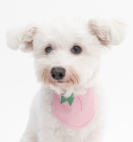 Peach Dog Bib