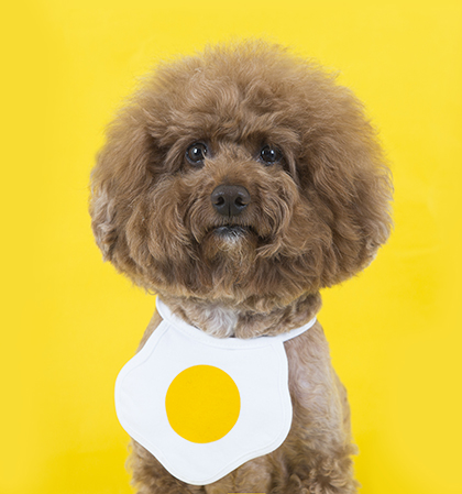 Fried Egg Dog Bib