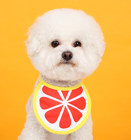 Orange Dog Bib